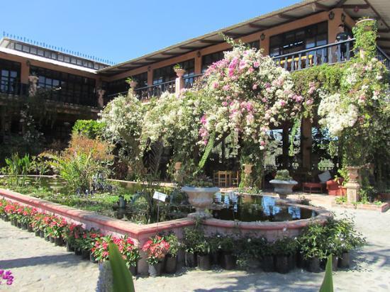 Puerto vallarta sightseeing rediscover mexico - Puerto vallarta botanical gardens ...